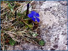 La flore du Burren